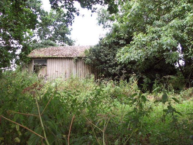 Overgrown RAF building