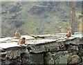 SH6554 : Chaffinches at Nantgwynant by Gerald England