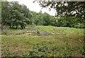 SX7353 : Open woodland near Storridge Court Farm by Derek Harper
