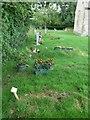 SU0692 : A brief evening stroll around All Saints, Leigh (k) by Basher Eyre