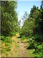 TM3548 : Path in Rendlesham Forest by Chris Holifield