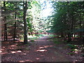 TM3548 : Track in Rendlesham Forest by Chris Holifield