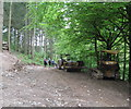 SO3566 : Into the shade at Birchen Coppice-Lingen, Herefordshire by Martin Richard Phelan