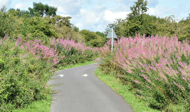 The Comber Greenway, Dundonald (August 2014)