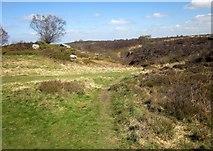 SE2065 : Brimham Moor by Derek Harper
