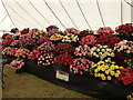 TF6928 : Roses at Sandringham Flower Show by Richard Humphrey