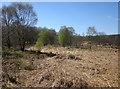 SE2164 : Brimham Moor by Derek Harper