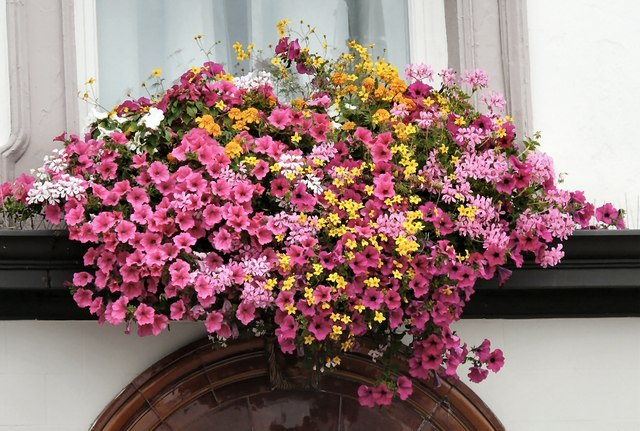White Lion Window Floral Display