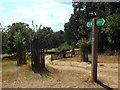 TQ1872 : Capital Ring in Richmond Park by Malc McDonald
