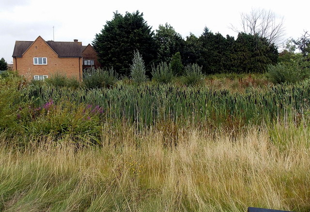 Reeds in a ditch at the edge of hospital grounds in Moreton-in-Marsh