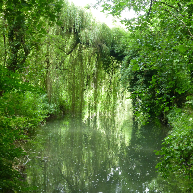 Trees overhanging the River Avon (Tetbury branch)
