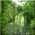 ST9387 : Trees overhanging the River Avon (Tetbury branch) by David Lally