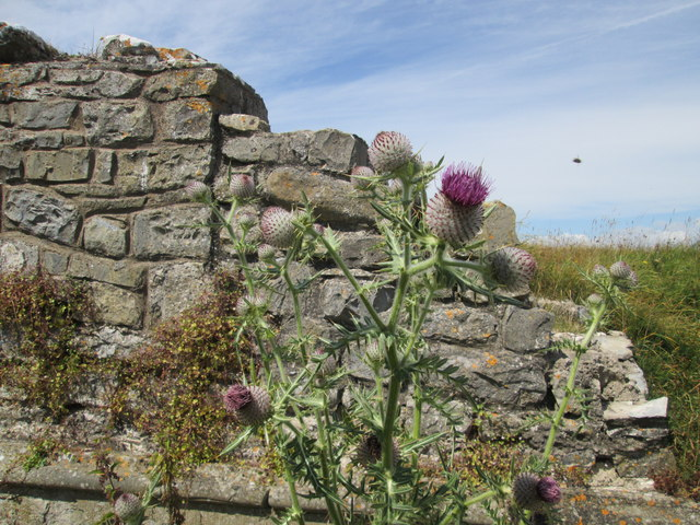 Thistles and ruins