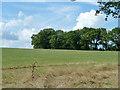 TQ8215 : Hillside trees by Robin Webster