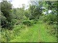 NJ1839 : Strathspey Railway trackbed by Richard Webb