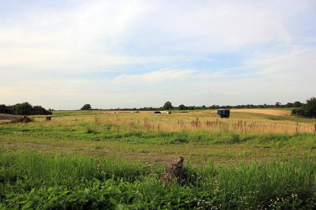 Pig Farm at Chelford