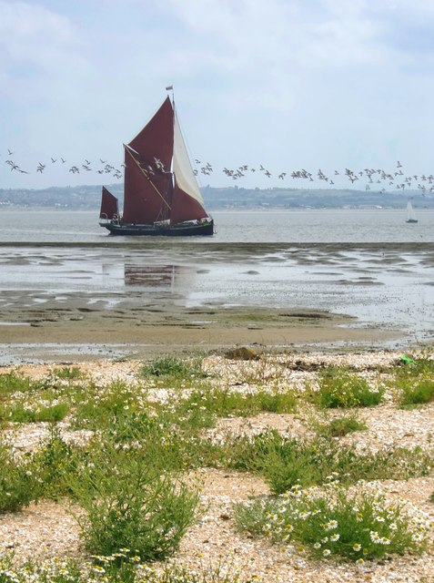 Sailing-barge and oystercatchers:  'Pudge' off Shellness