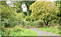 J3369 : Paths, Belvoir forest, Belfast - August 2014(2) by Albert Bridge