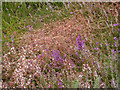SU9361 : Common Dodder, Brentmoor Heath by Alan Hunt