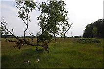 SD4260 : Heysham Moss by Ian Taylor