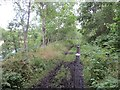 NJ2441 : Strathspey Railway trackbed by Richard Webb
