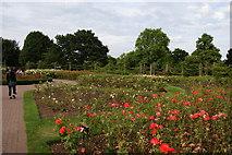 TQ2882 : Rose garden in Regent's Park by Bill Boaden