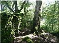 SD7664 : Footpath gate near Black Bank by Humphrey Bolton