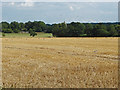 SU8772 : Stubble field near Warfield by Alan Hunt