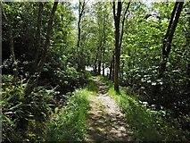 NN2904 : Path to Arrochar by Lairich Rig