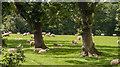 SJ6980 : Litley Farm by Peter McDermott