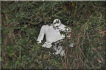 SS5726 : North Devon : Hedgerow by Lewis Clarke