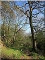 SE2662 : Nidderdale Way below High Kettle Spring by Derek Harper
