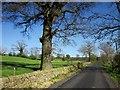 SE2762 : Kettle Spring Lane by Derek Harper