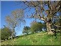 SE2863 : Trees by the Nidderdale Way by Derek Harper