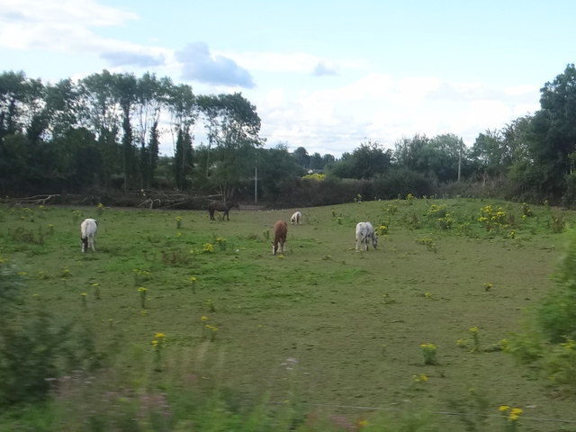 Field with horses near Chancery Lane