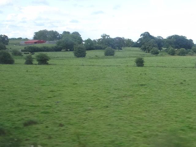 Coleraine fields