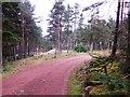 NJ5700 : A track junction in Westertown Wood by Stanley Howe