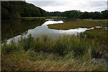 SX4663 : Blaxton Creek by jeff collins