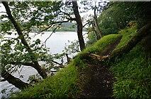 SX4663 : Path through Blaxton Wood by jeff collins