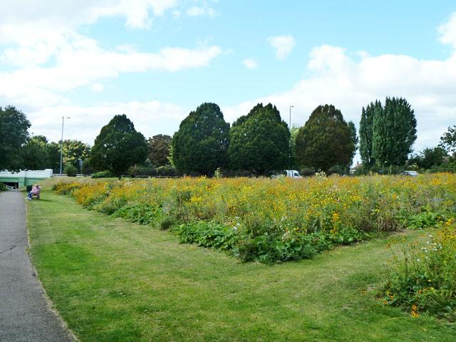 Flowery bank, Crane Park