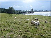 SK9306 : Rutland Water and Normanton Church by Marathon
