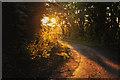 ST0605 : East Devon : Country Lane by Lewis Clarke