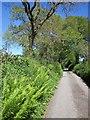 SX3271 : Lane near Golberdon by Derek Harper