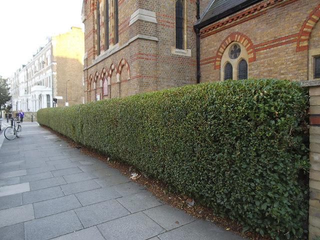 Privet hedge outside St Matthew's church