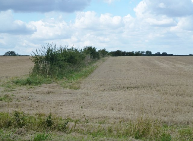 Cereal stubble and hedge near Great Gidding
