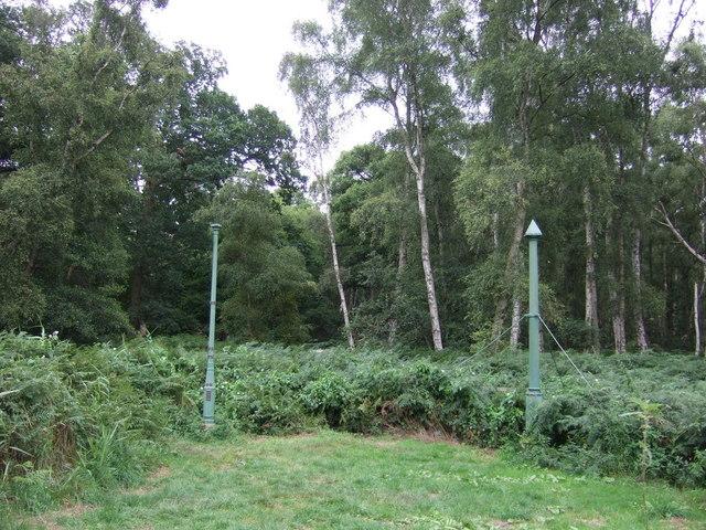 Holme Fen Posts, Holme Fen Nature Reserve