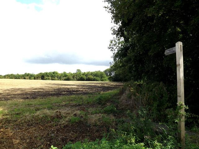 Footpath to Kirstead Ling