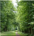 SP9210 : Icknield Way Trail, Tring Park by Rob Farrow