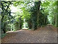SP9310 : Choose your path - Park Wood, Tring Park by Rob Farrow