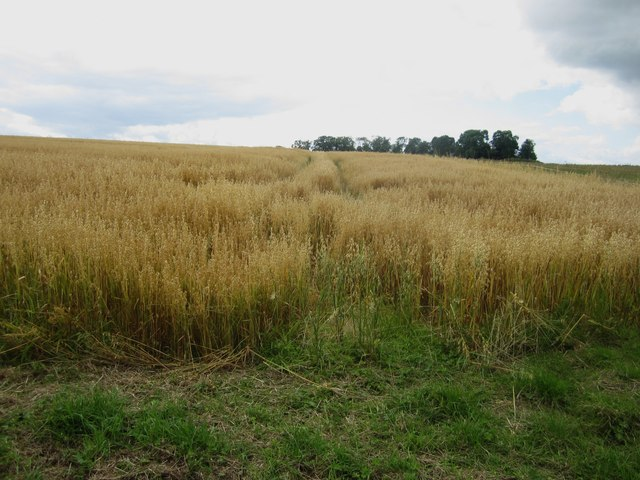 Arable land east of Townfoot